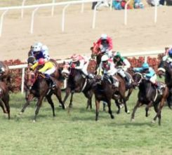 Bratislava Horse Racing